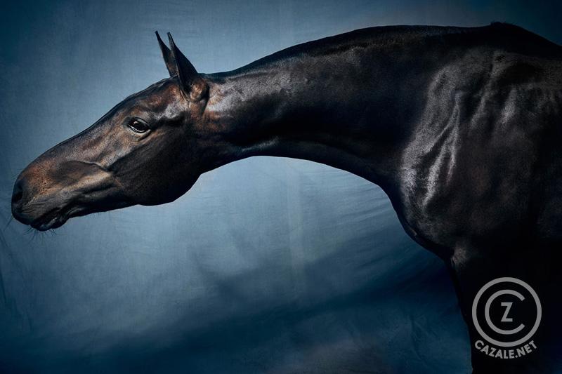 POLO HORSE (III) | 2018, Frank Wartenberg