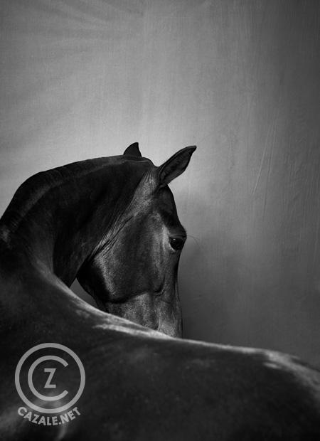 CAZALE-Editionen POLO HORSES von Frank Wartenberg